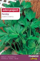 Parsley 'Gigante Di Napoli' - Petroselium crispum miller