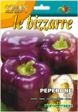 Pepper Purple Oda (A) Capsicum annuum L.