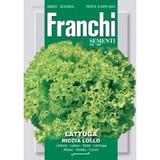 Lettuce Lollo Bionda Green