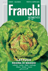 Lettuce Regina Di Maggio