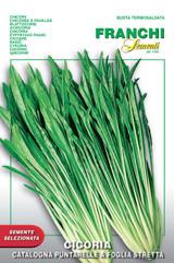 Chicory Catalogna A Foglia Stretta del Veneto *Sold out due to overwhelming demand*