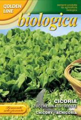 Organic Chicory Zuccherino Di Trieste