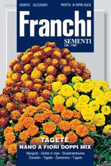 Dwarf Marigold fiori doppi