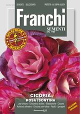Chicory Rosa Isontina