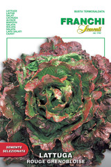 Lettuce Red Grenoble
