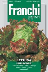 Lettuce Ubriacona