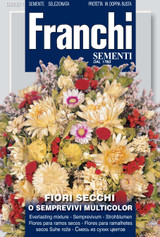 Everlasting mix Flower - fiori secchi