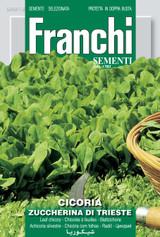 Chicory Zuccherino Of Trieste