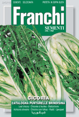 Chicory Puntarelle Of Brindisi