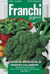 Broccoli Of Calabria