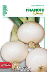 Onion Giugnese (A) Allium cepa L.