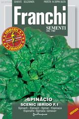Spinach Scenic F1