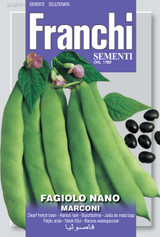French dwarf bean Marconi UK only (A) Phaseolus vulgaris L.