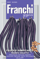 Climbing French Bean Trionfo Violetto (A) Phaseolus vulgaris L