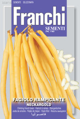 Climbing French Bean Neckargold (A) Phaseolus vulgaris L.