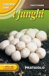 Prataiolo Button Mushroom