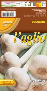 Italian Garlic bianco veneto (A) Allium Sativum L.