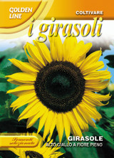 Sunflower DB alto giallo / Tall yellow sunflower (A) Helianthus SPP