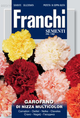 Carnation of Nice