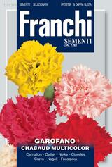 Carnation Chabaud