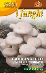 Cardoncello mushroom Ideal for Indoor Gardening *UK Only