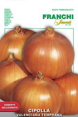 Onion Valenciana Temprana (A) Allium cepa L.