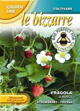 Strawberry 'Di Bosco'