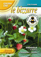 Strawberry 'Di Bosco'
