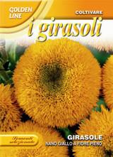 Sunflower nano giallo a fiore pieno (A)Helianthus SPP