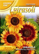 Sunflower ornamentale multicolor (A)Helianthus SPP