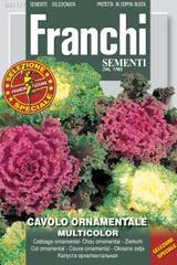 Cavolo ornamentale - Ornamental cabbage