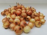 Golden onion set 500g *Pre-order for Autumn 2020*