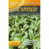 "Radish ""Rafano"" Green manure"