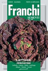 Lettuce Pesciatina Of Tuscany