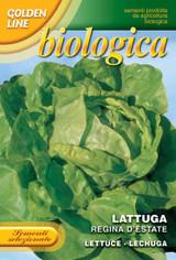 Organic Lettuce Regina D'Estate