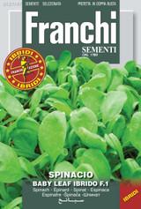 Spinach Baby Leaf F1 Emilia