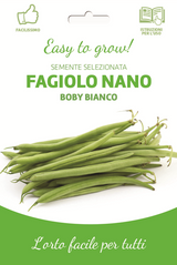 Easy Dwarf Green French Bean (A) Phaseolus vulgaris L.