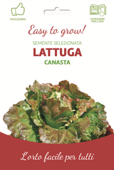 Easy Red Lettuce Head 'Canasta'