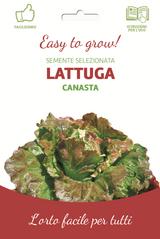 Easy Red Lettuce Head 'Canasta'