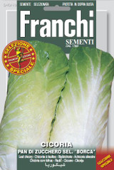 Chicory Pan Di Zucchero 'Borca'
