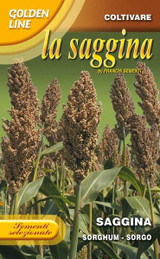 Broom Corn - Saggina or Sorghum, Durra, Jowari or Milo