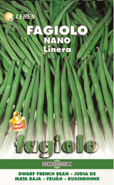 Dwarf Green Beanbuschbohne Linera large packet Leben (A) Phaseolus vulgaris L.