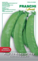 Pea Mangetout – VX 100g large pack (A) Pisum sativum L.686/XB