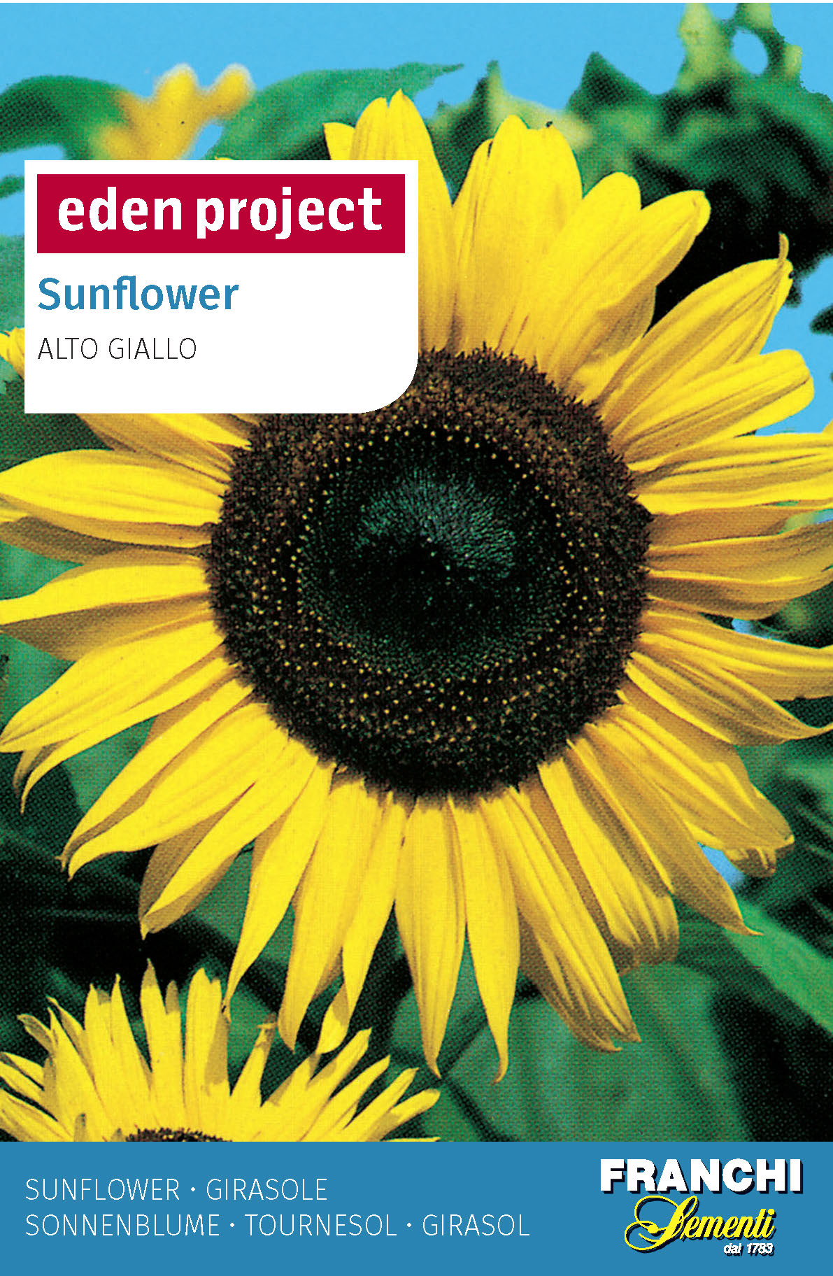 Sunflower 'Alto Giallo' (A) Helianthus SPP