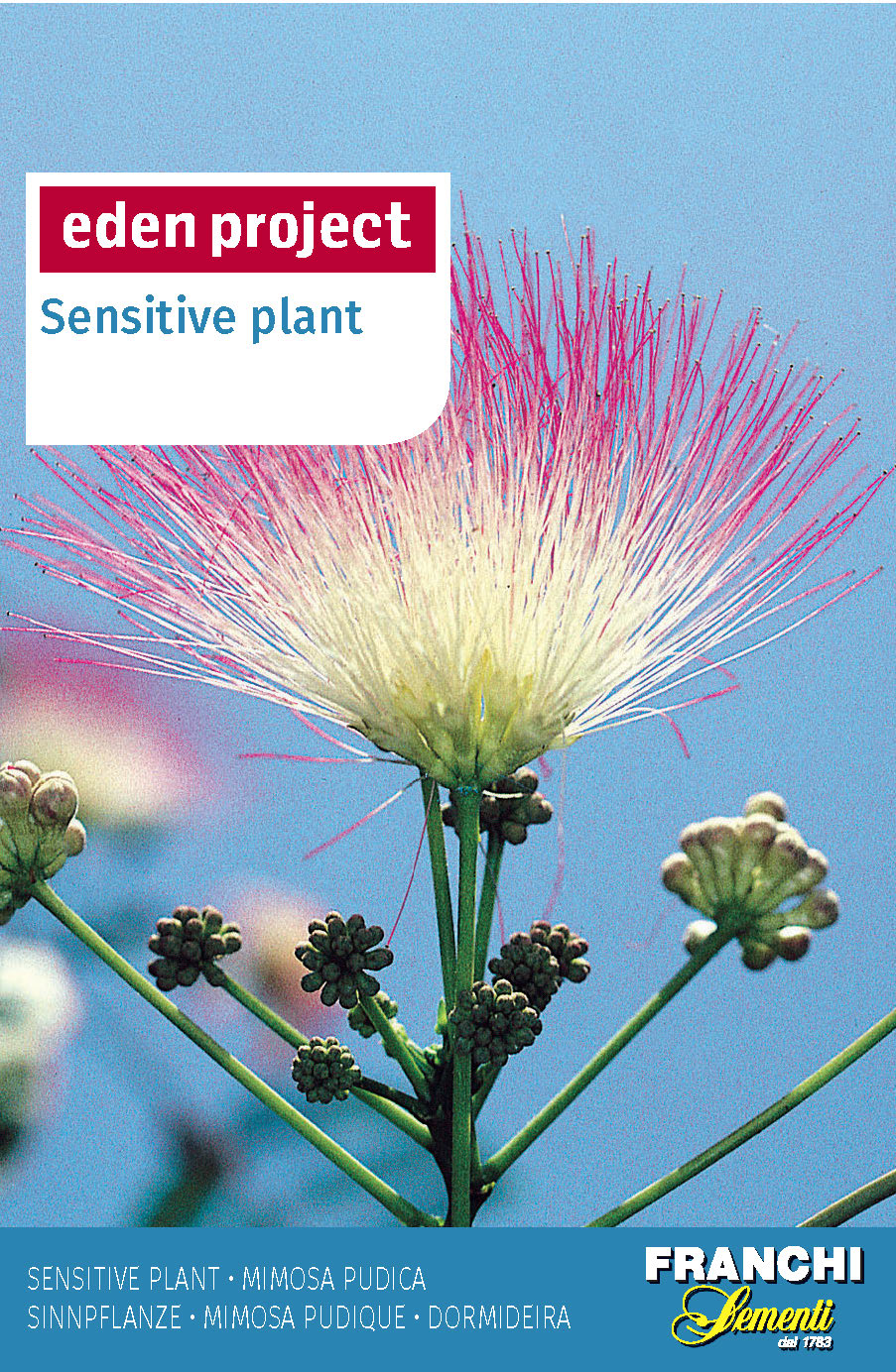 The Sensitive Plant - Mimosa pudica Eden Project Range