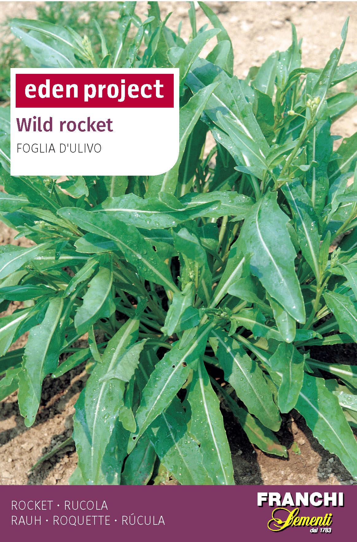 Wild Rocket 'Foglia D'ulivo' - Diplotaxis tenuifolia Olive leaf rocket