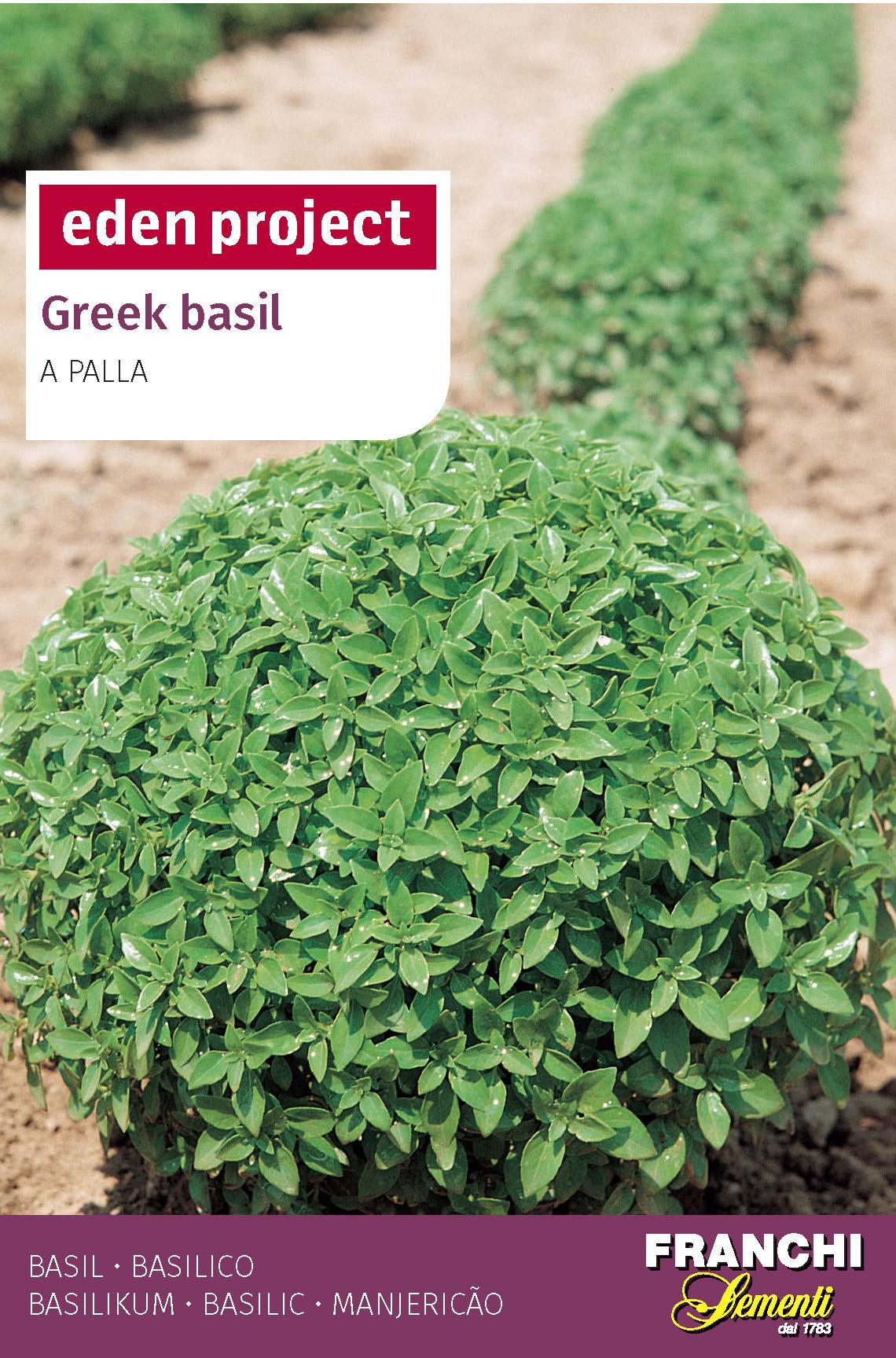 Greek Basil 'A Palla' - Ocimum basilicum