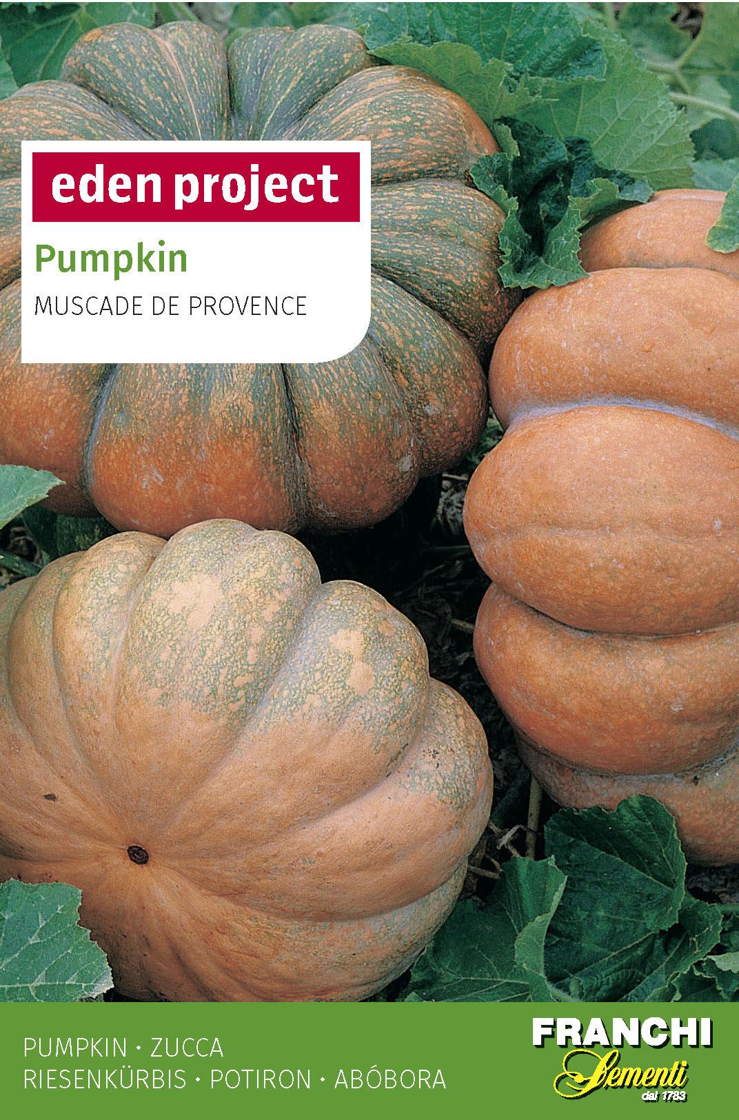 Pumpkin 'Moscade De Provence' Cucurbita Moschata D