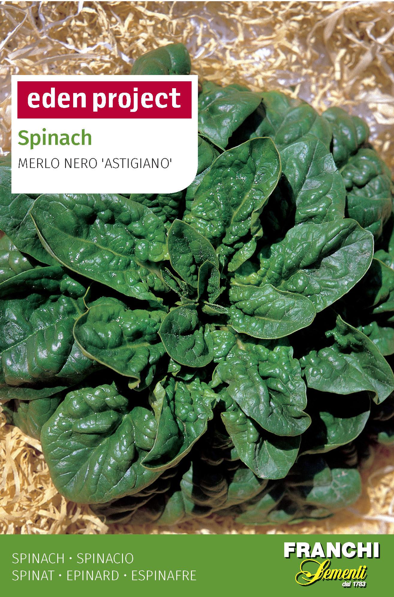 Spinach 'Merlo Nero Astigiana' - Spinacia oleracea