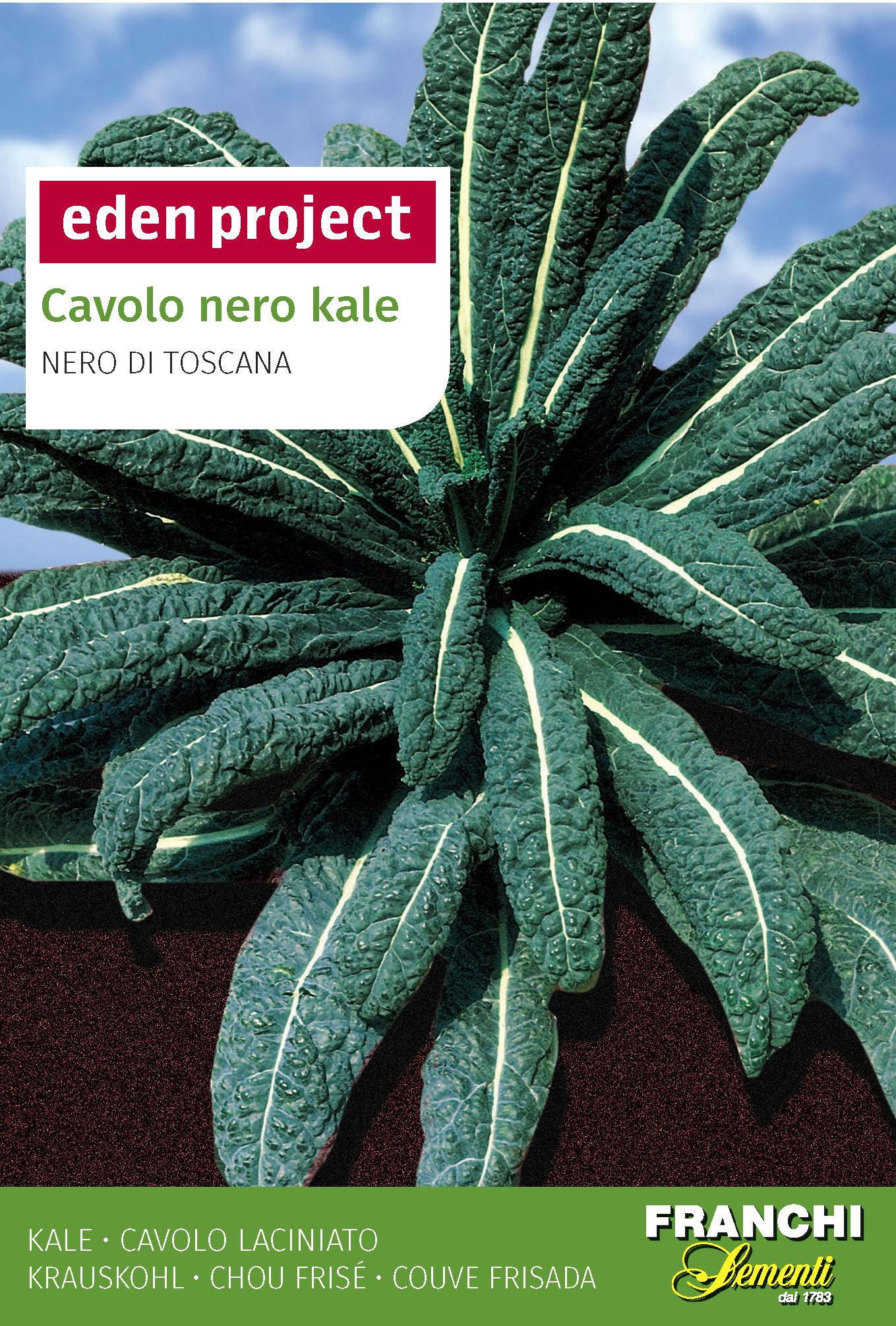 Cavolo Nero Kale 'Nero Di Toscana' - Brassica oleracea L